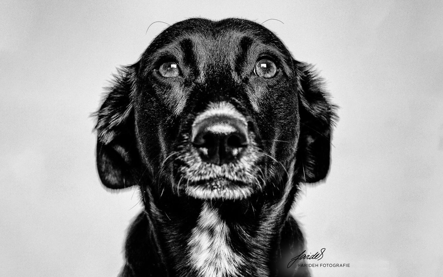 Agenturhund Frida